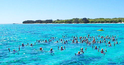 heron island great barrier reef swim