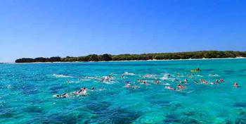 heron barrier reef swimback